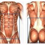 La powerhouse include muscoli che stabilizzano la postura e che permettono l'esecuzioni di grandi movimenti.