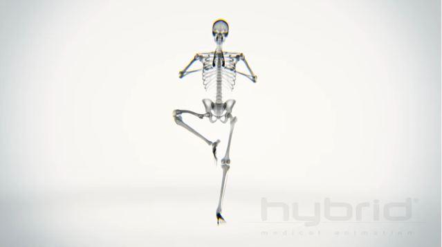 Le posizioni yoga ai raggi X in un video della Hybrid Medical Animation