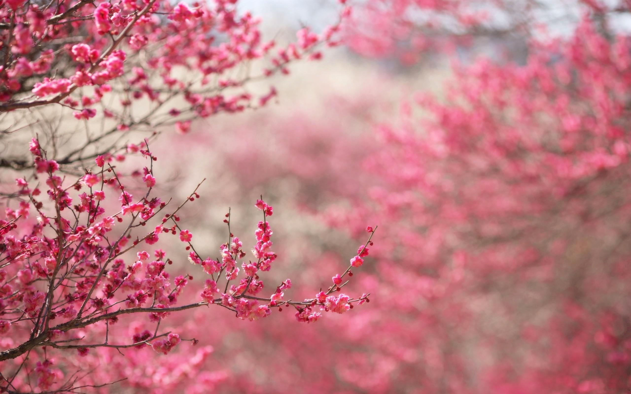 Il significato simbolico dell'equinozio di primavera