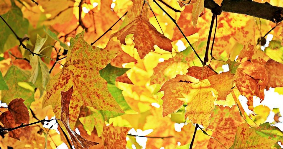 L'equinozio d'autunno segna un periodo di cambiamento anche spirituale