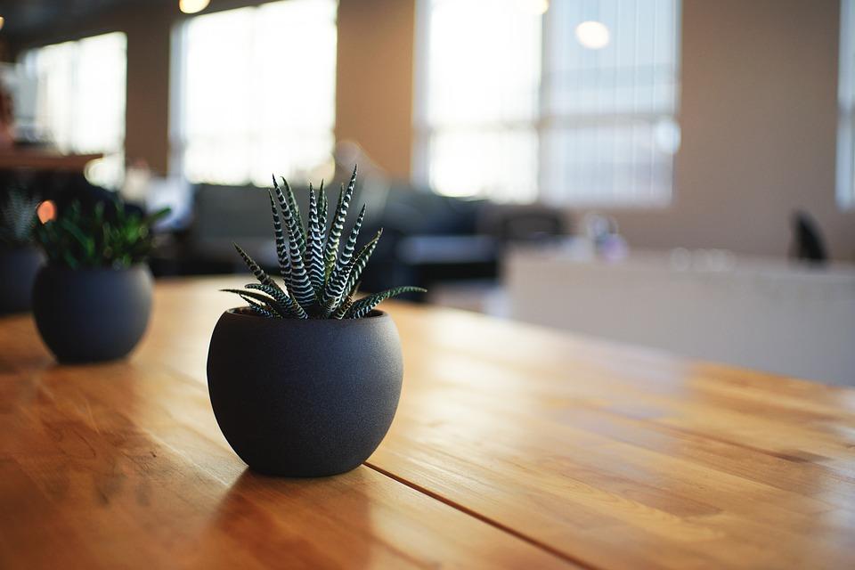 piante-che-purificano-laria